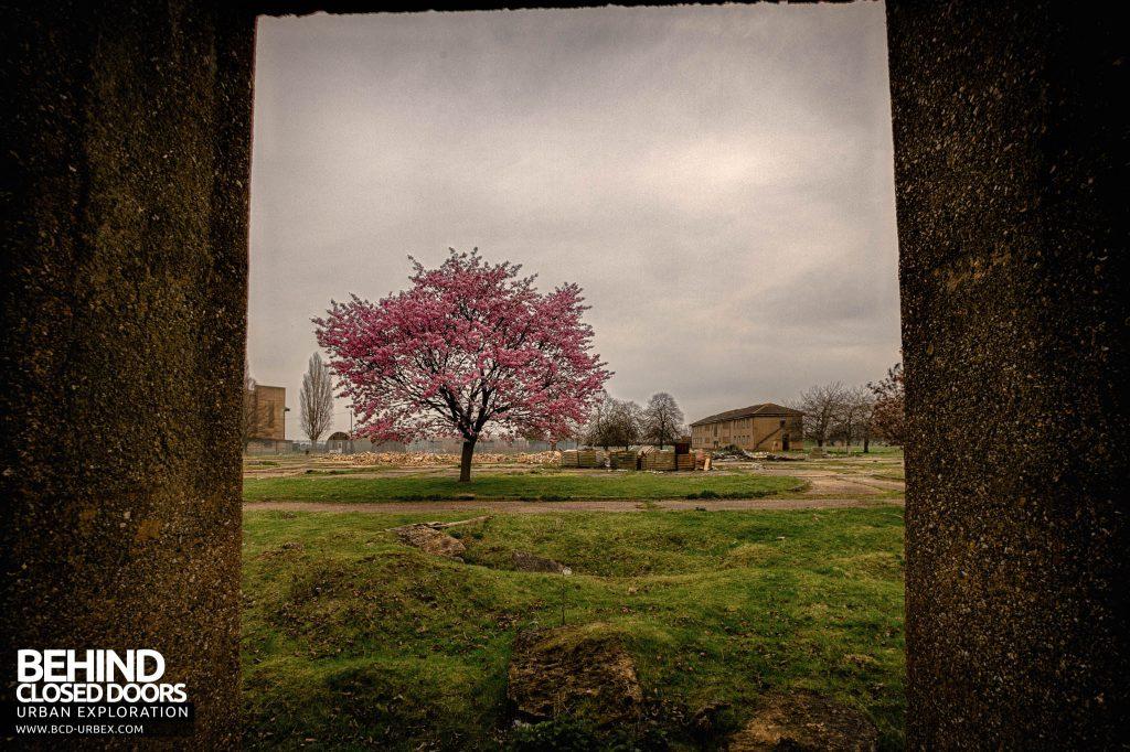 RAF Upwood - Blossom tree