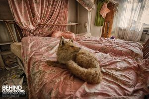 Dr Annas House and Surgery - Stuffed fox on the bed