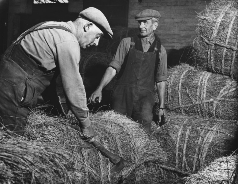Workers opening bales of Esparto grass