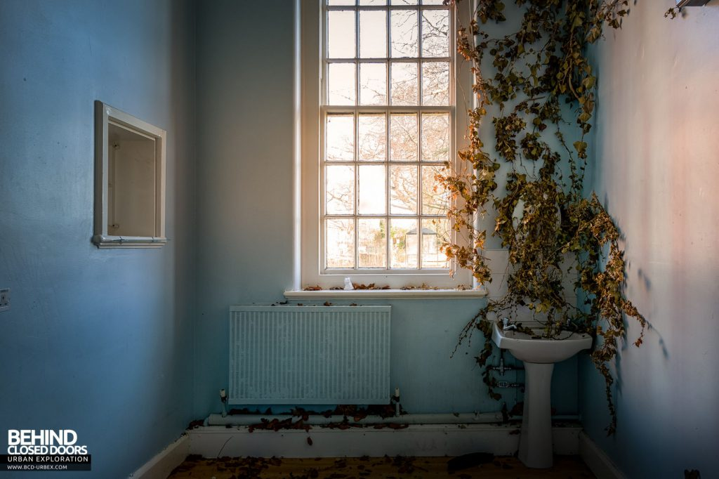 Whitchurch Hospital - Ivy growing in a room